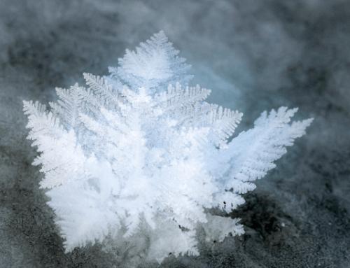 Hjerner er som iskrystaller